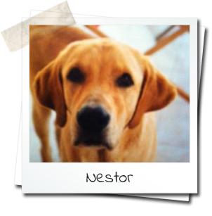 photo du chien Nestor